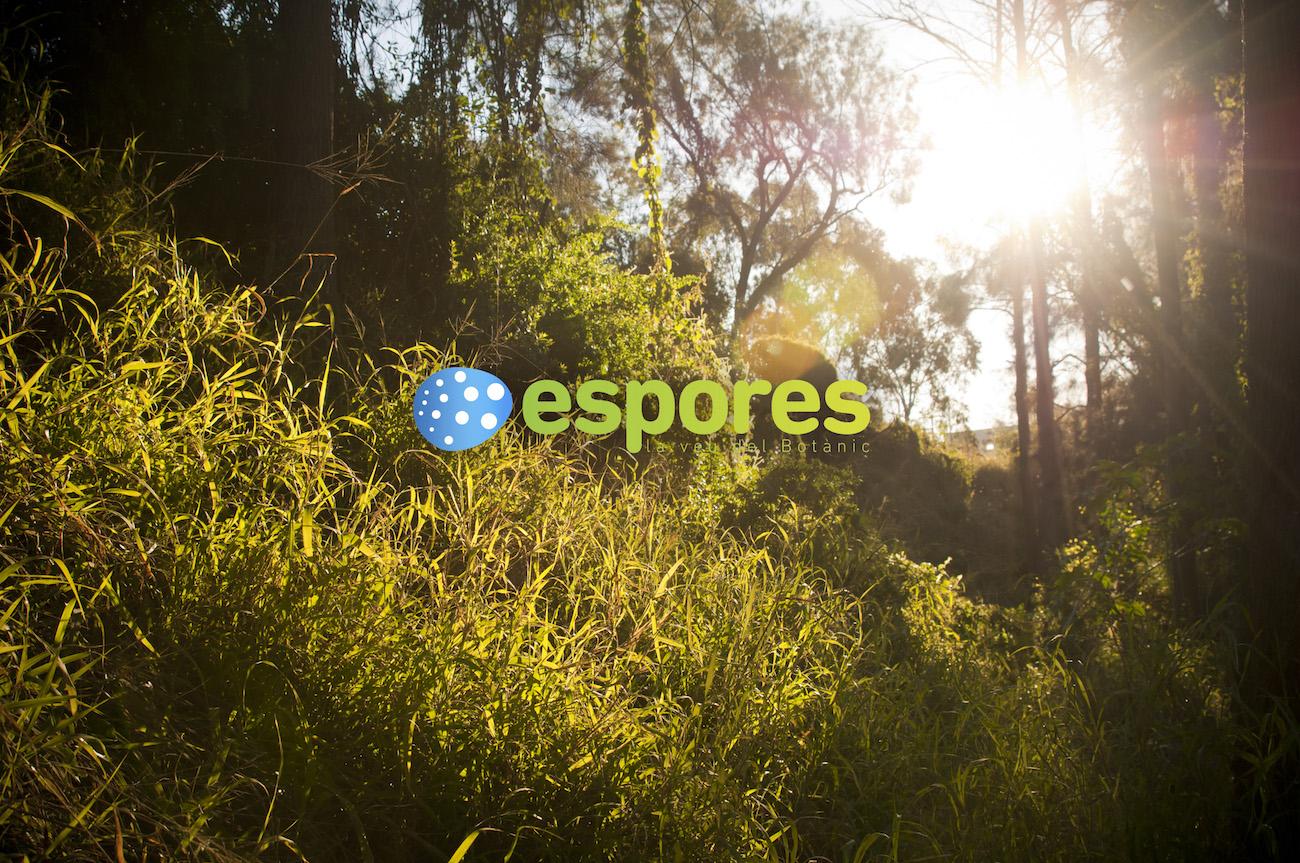 Espores, la revista verde que oxigena València