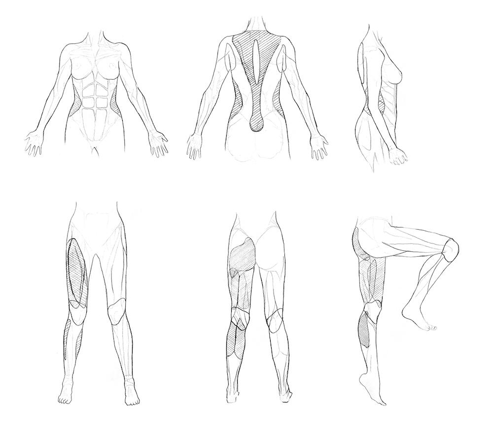 Estudio anatómico Uyuni
