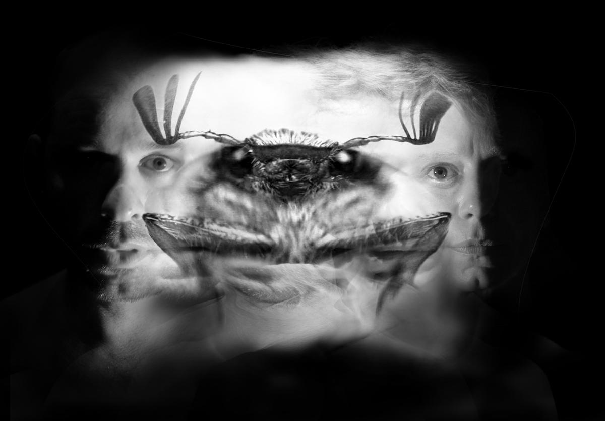 Metamorfosis en 3D